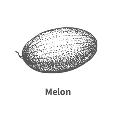 Hand-drawn melon vector