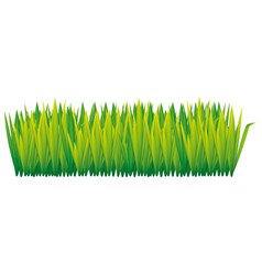 Green tall grass icon vector