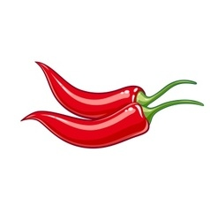 Pair red chile pepper vector