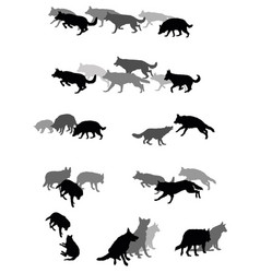 Set of group of dogs vector