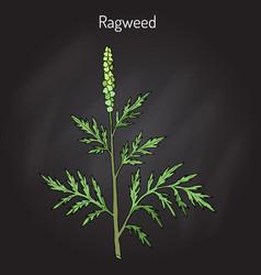 Common ragweed ambrosia artemisiifolia vector