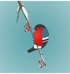 Bullfinch sitting on ashberry twig vector