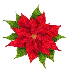 Red poinsettia flower realistic vector image vector image