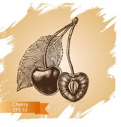 sketch - cherry vector image