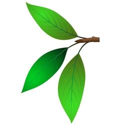 Three leaves on twigs vector image