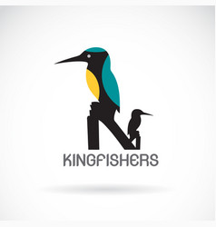 kingfishers alcedo atthis on white background vector image vector image