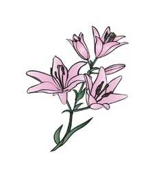 Lily on white background vector image vector image
