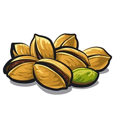 pistachios vector image vector image