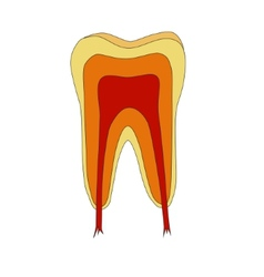Tooth vector
