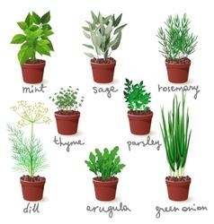 Herbs in pots vector