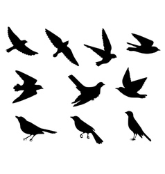 birds silhouettes set vector image vector image