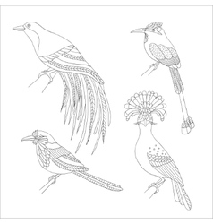 Set of tropical birds hand draw on a white vector