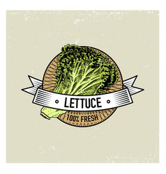 Lettuce vintage set of labels emblems or logo for vector