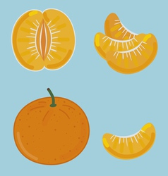 Mandarin by segments vector