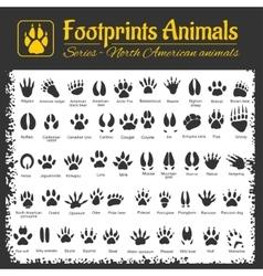 Animal tracks - north american animals vector