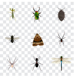 Realistic dor damselfly insect and other vector