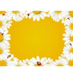 chamomile frame vector image