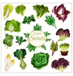 Salad greens leafy vegetables poster vector