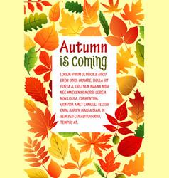 Autumn fall leaves poster template vector