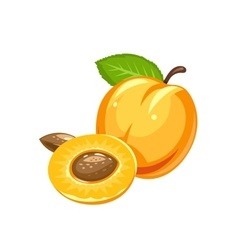 Apricot Ripe juicy fruit vector image