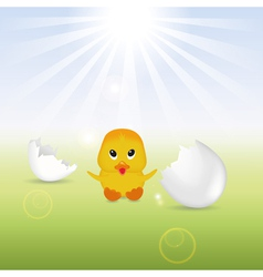 Cute Chick with Eggshells vector image vector image