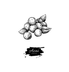 Acai berry superfood drawing isolated hand vector