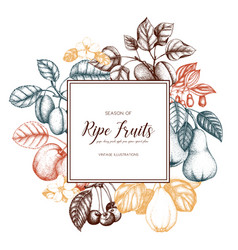 vintage fruits card design vector image vector image