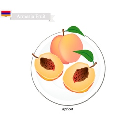 Fresh Apricot A Popular Fruit in Armenia vector image