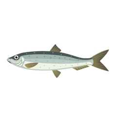 Atlantic herring lupea harengus fish vector image