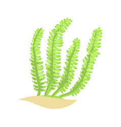 Bright green feather alga tropical aquatic plant vector