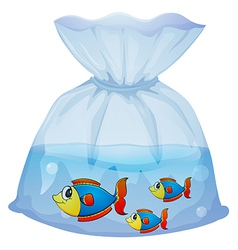 A plastic pouch with three fishes vector image