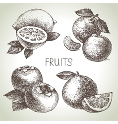 Hand drawn sketch fruit set eco foods vector