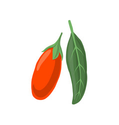 goji berry and leaf vector image