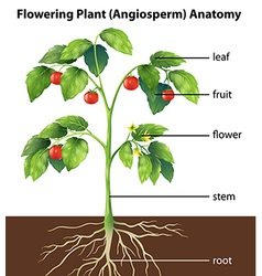 Parts of a plant vector