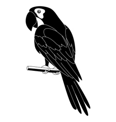 Parrot black silhouette vector image vector image