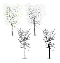 tree birch vector image vector image