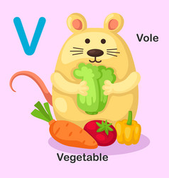 isolated animal alphabet letter v-vole vegetable vector image