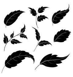 Leaves black silhouettes vector image