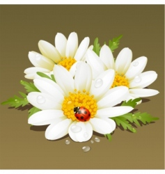 chamomile floral vector image vector image