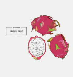 hand drawn set of exotic fruits isolated pitaya vector image vector image