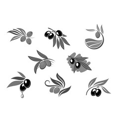 Olive fruit branch with oil isolated icon set vector