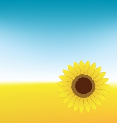 Sunflower on summer field vector