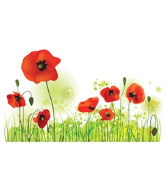 Red Poppies Field summer landscape vector image