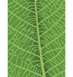 texture of leaf vector image