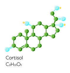 cortisol hormone structural chemical formula vector image vector image