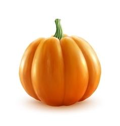 Bright orange realistic pumpkin isolated on vector image