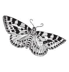 Gooseberry or magpie moth vintage vector