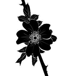 Rosehip vector image