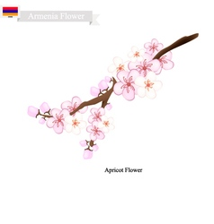 Apricot flowers a popular flower in armenia vector