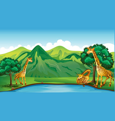 three giraffes by the pond vector image vector image